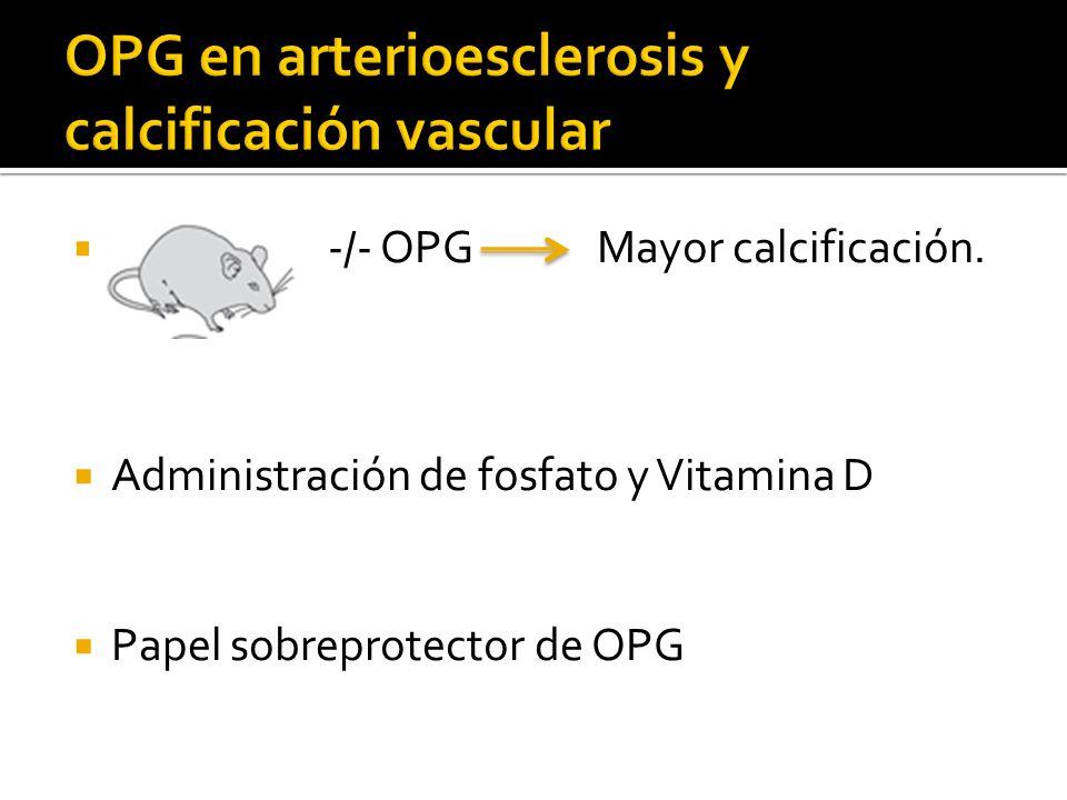 -/- OPG Mayor calcificación. Administración de fosfato y Vitamina D Papel sobreprotector de OPG