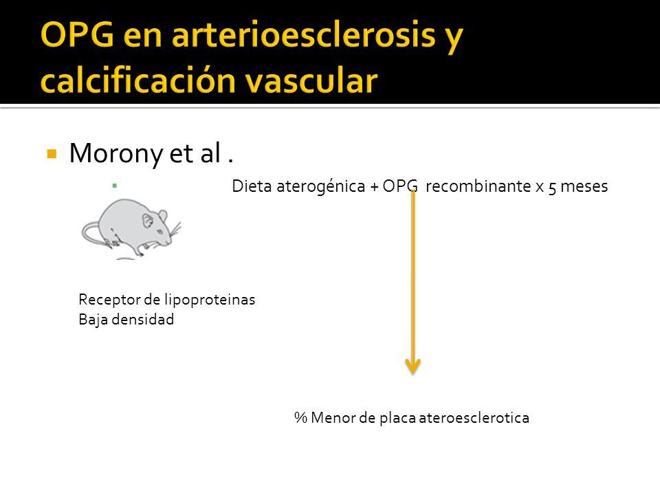 Morony et al. Dieta aterogénica + OPG recombinante x 5 meses Receptor de lipoproteinas Baja densidad % Menor de placa ateroesclerotica