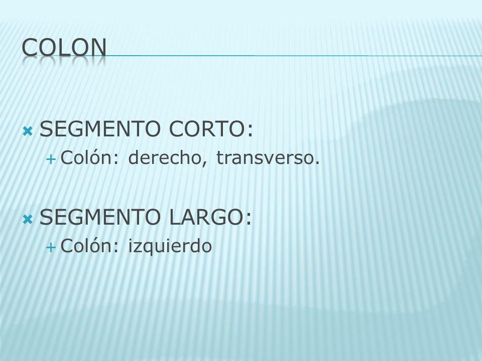 SEGMENTO CORTO: Colón: derecho, transverso. SEGMENTO LARGO: Colón: izquierdo