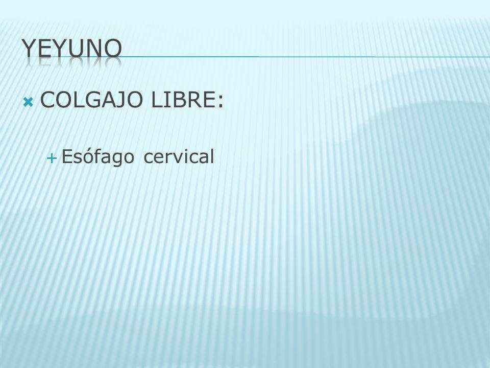 COLGAJO LIBRE: Esófago cervical