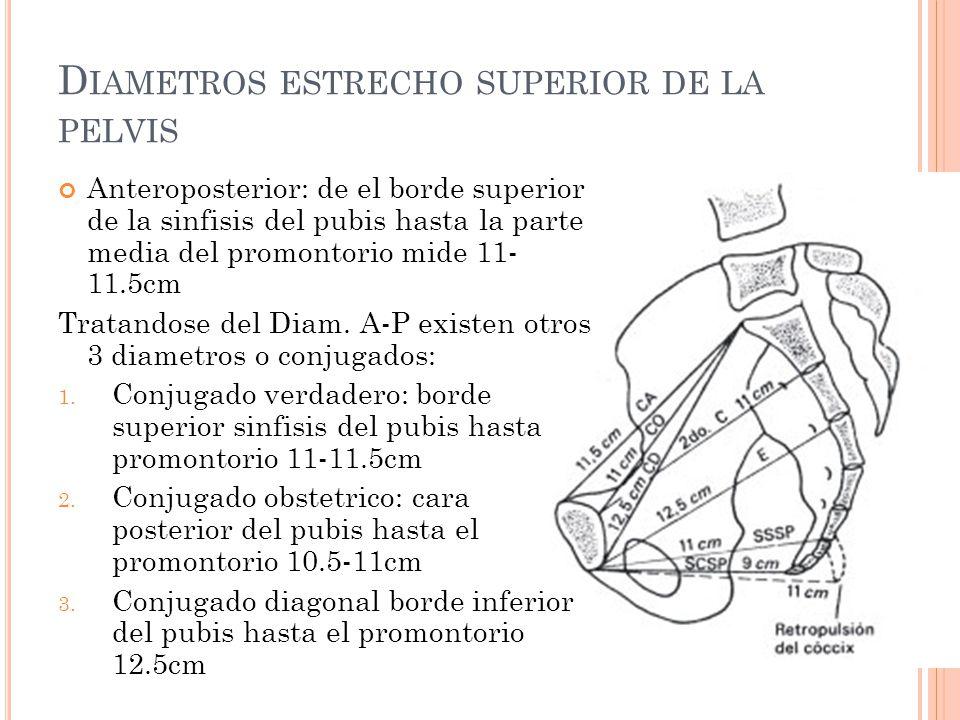 D IAMETROS ESTRECHO SUPERIOR DE LA PELVIS Anteroposterior: de el borde superior de la sinfisis del pubis hasta la parte media del promontorio mide 11-