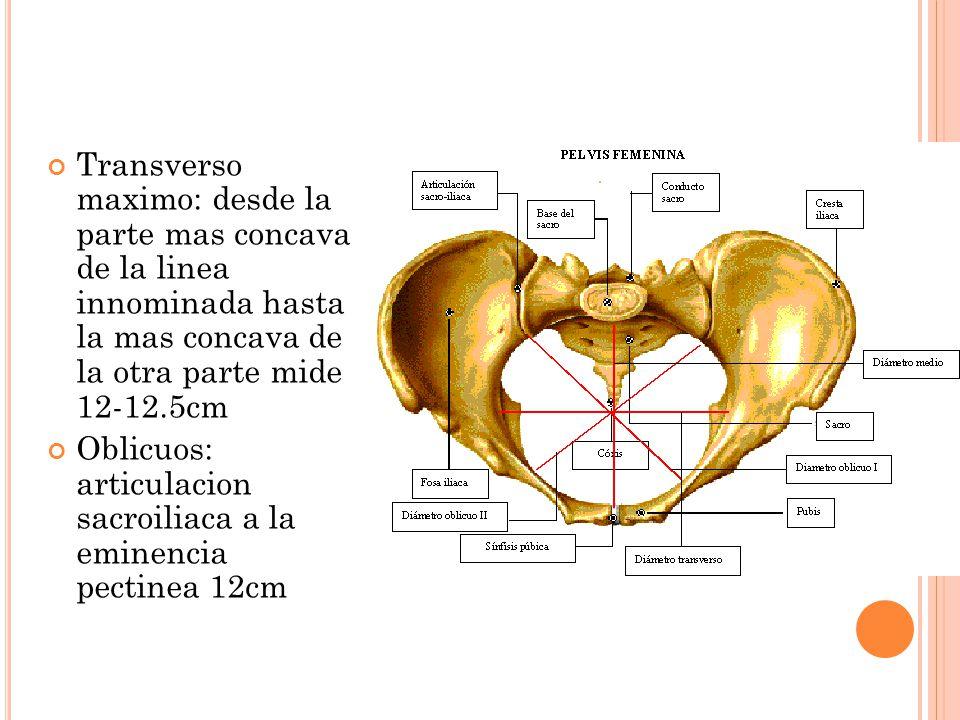 Transverso maximo: desde la parte mas concava de la linea innominada hasta la mas concava de la otra parte mide 12-12.5cm Oblicuos: articulacion sacro