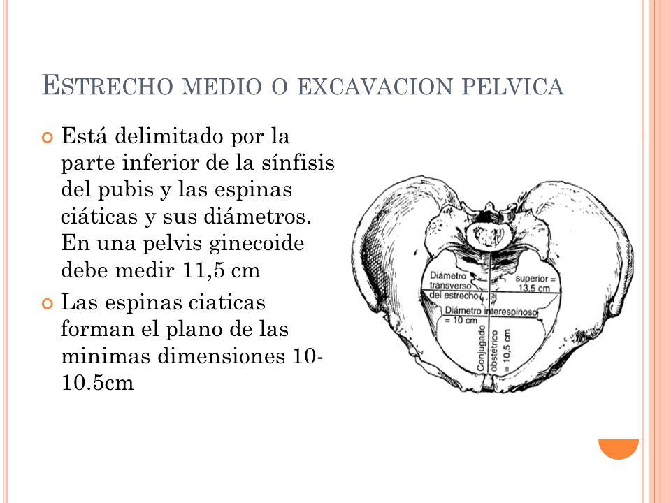 E STRECHO MEDIO O EXCAVACION PELVICA Está delimitado por la parte inferior de la sínfisis del pubis y las espinas ciáticas y sus diámetros. En una pel