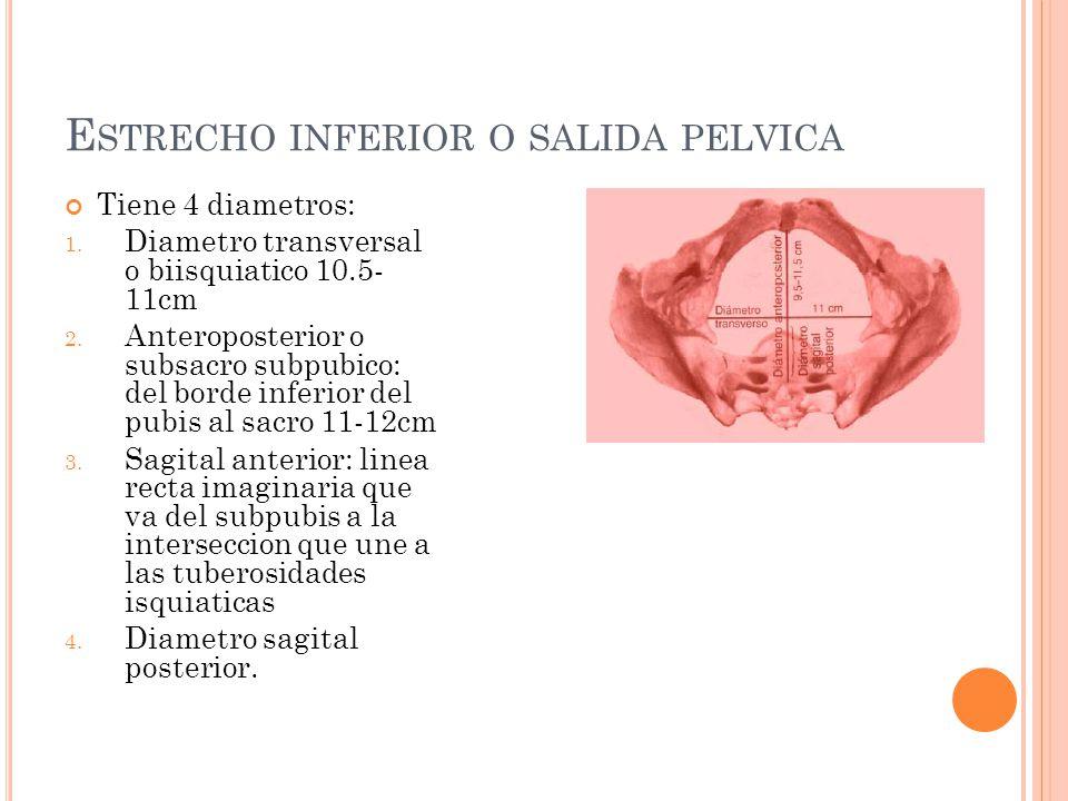 E STRECHO INFERIOR O SALIDA PELVICA Tiene 4 diametros: 1. Diametro transversal o biisquiatico 10.5- 11cm 2. Anteroposterior o subsacro subpubico: del