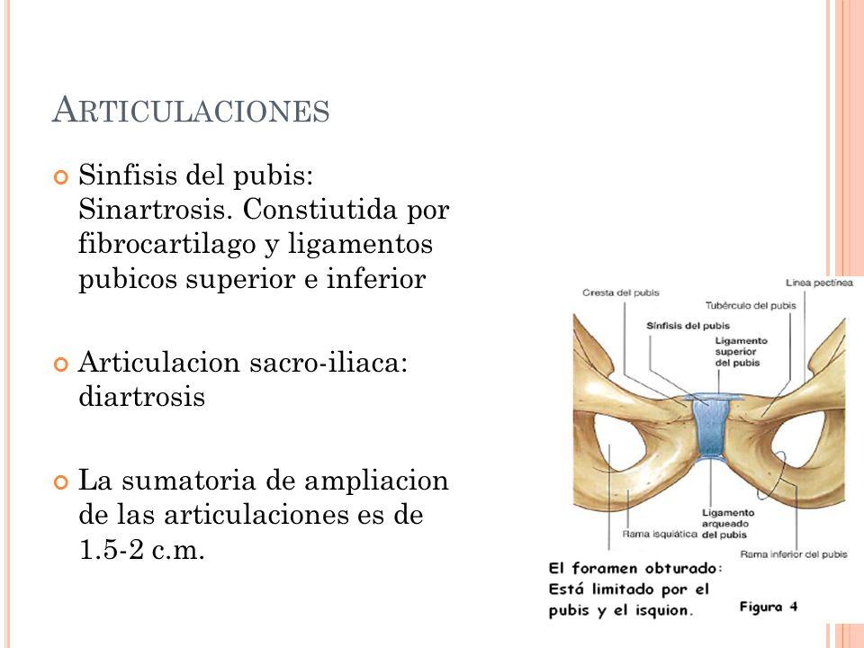 A RTICULACIONES Sinfisis del pubis: Sinartrosis. Constiutida por fibrocartilago y ligamentos pubicos superior e inferior Articulacion sacro-iliaca: di