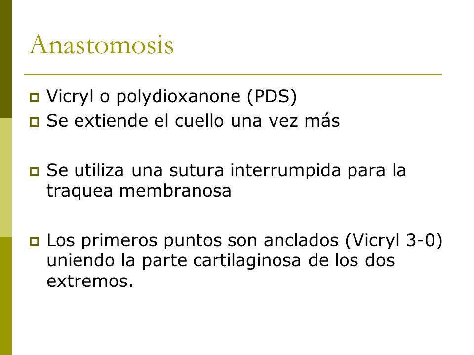 Anastomosis Vicryl o polydioxanone (PDS) Se extiende el cuello una vez más Se utiliza una sutura interrumpida para la traquea membranosa Los primeros puntos son anclados (Vicryl 3-0) uniendo la parte cartilaginosa de los dos extremos.