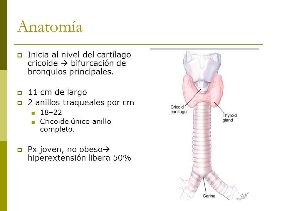 Anatomía Inicia al nivel del cartílago cricoide bifurcación de bronquios principales.