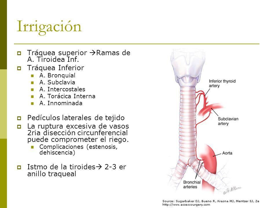 Irrigación Tráquea superior Ramas de A.Tiroidea Inf.