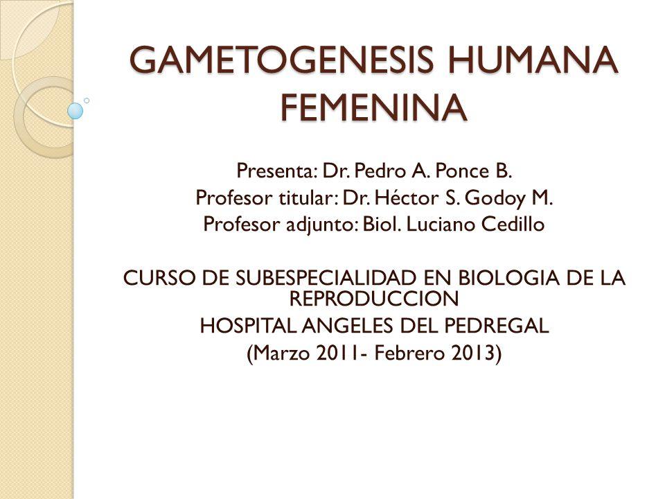 GAMETOGENESIS HUMANA FEMENINA Presenta: Dr.Pedro A.