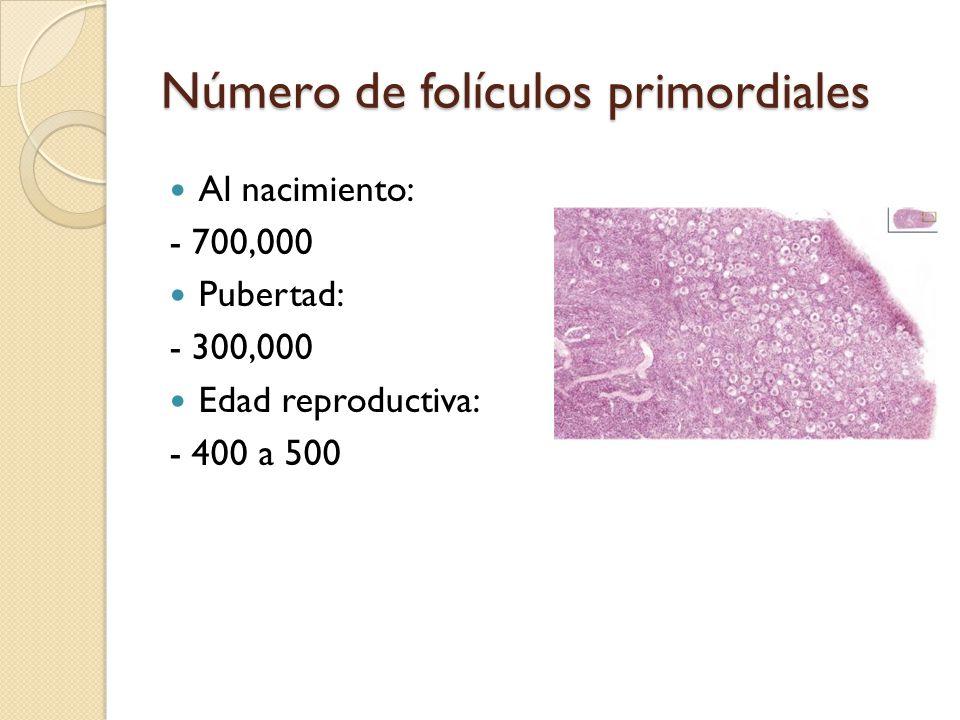 Número de folículos primordiales Al nacimiento: - 700,000 Pubertad: - 300,000 Edad reproductiva: - 400 a 500