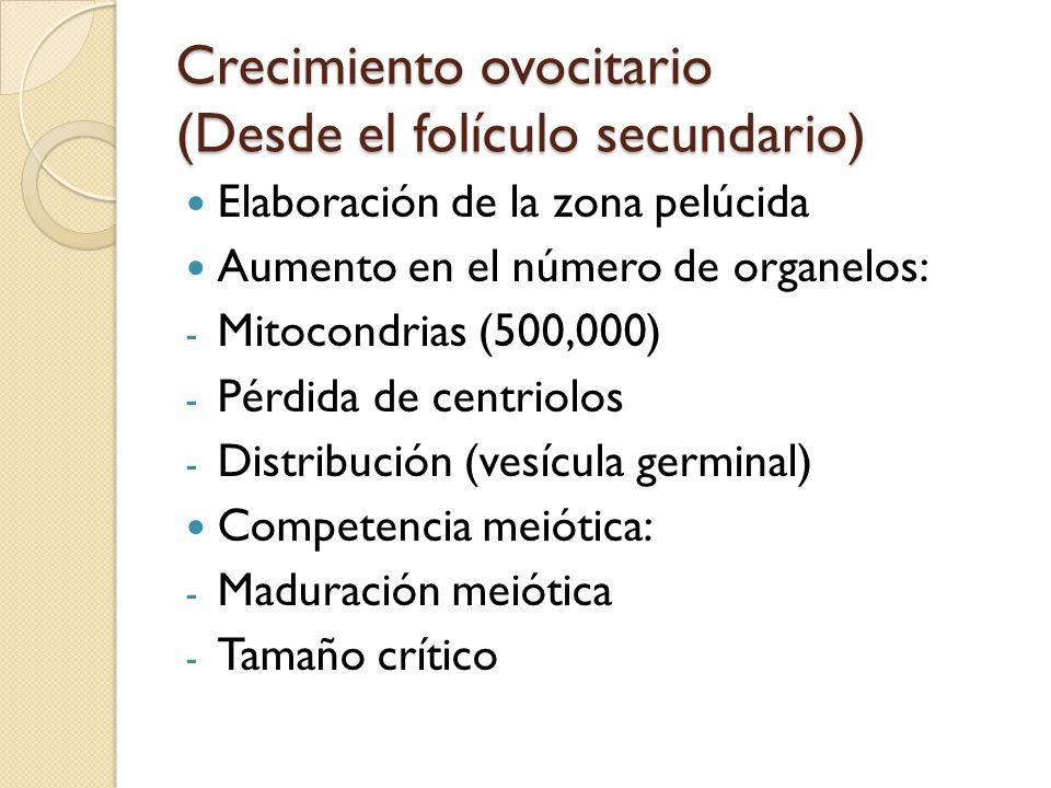 Crecimiento ovocitario (Desde el folículo secundario) Elaboración de la zona pelúcida Aumento en el número de organelos: - Mitocondrias (500,000) - Pérdida de centriolos - Distribución (vesícula germinal) Competencia meiótica: - Maduración meiótica - Tamaño crítico