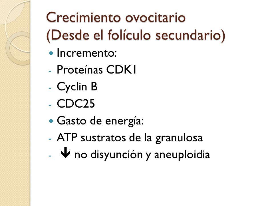 Crecimiento ovocitario (Desde el folículo secundario) Incremento: - Proteínas CDK1 - Cyclin B - CDC25 Gasto de energía: - ATP sustratos de la granulosa - no disyunción y aneuploidia