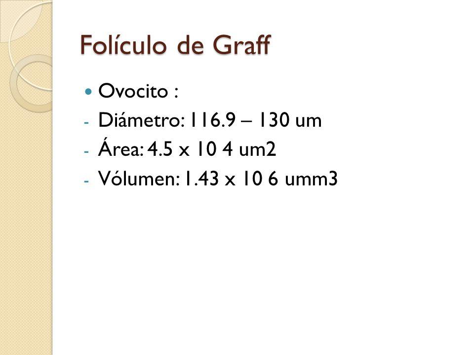 Folículo de Graff Ovocito : - Diámetro: 116.9 – 130 um - Área: 4.5 x 10 4 um2 - Vólumen: 1.43 x 10 6 umm3