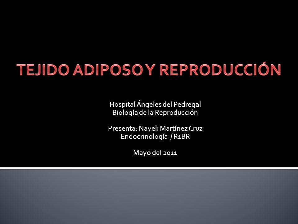 TEJIDO ADIPOSO Homeostasis de Glucosa y Lípidos Hematopo- yesis Sistema Inmune Esteroidogé- nesis Reproducción