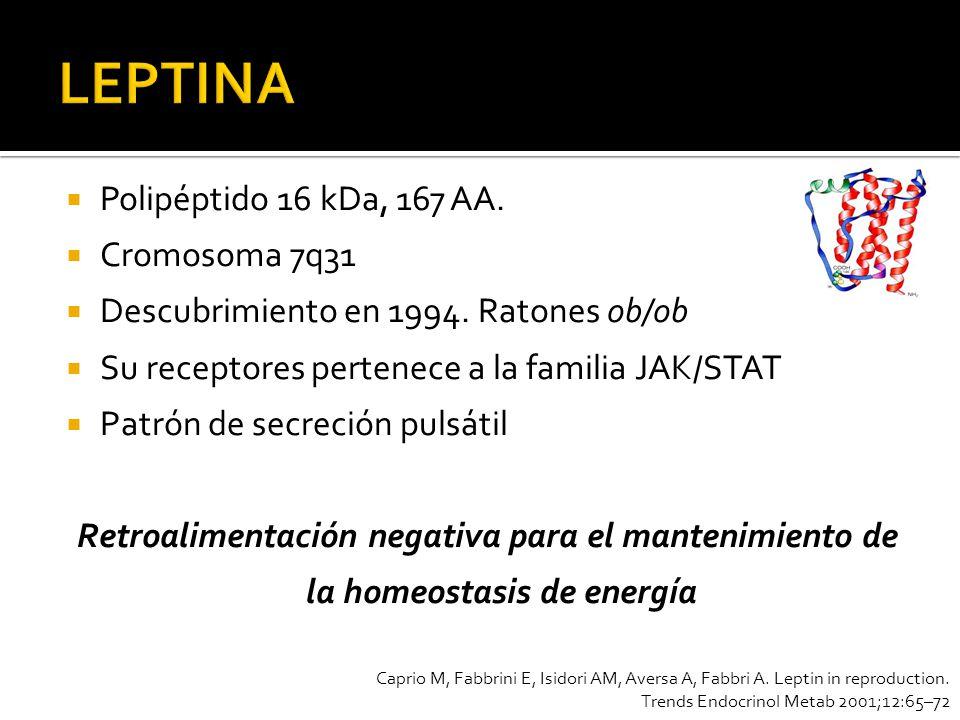 Polipéptido 16 kDa, 167 AA. Cromosoma 7q31 Descubrimiento en 1994. Ratones ob/ob Su receptores pertenece a la familia JAK/STAT Patrón de secreción pul