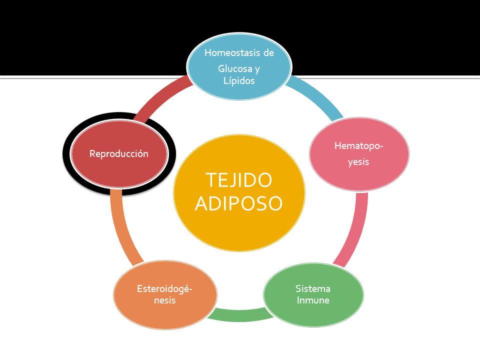 Regulación del tejido adiposo Lipólisis y Lipogénesis