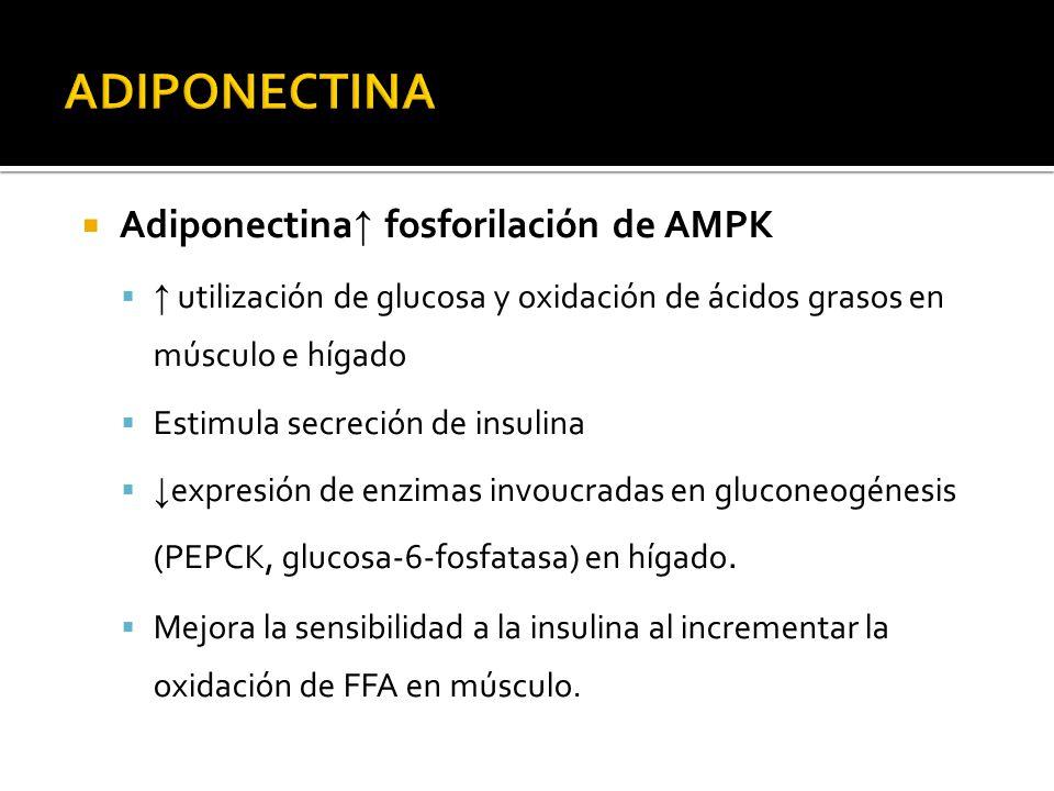 Adiponectina fosforilación de AMPK utilización de glucosa y oxidación de ácidos grasos en músculo e hígado Estimula secreción de insulina expresión de