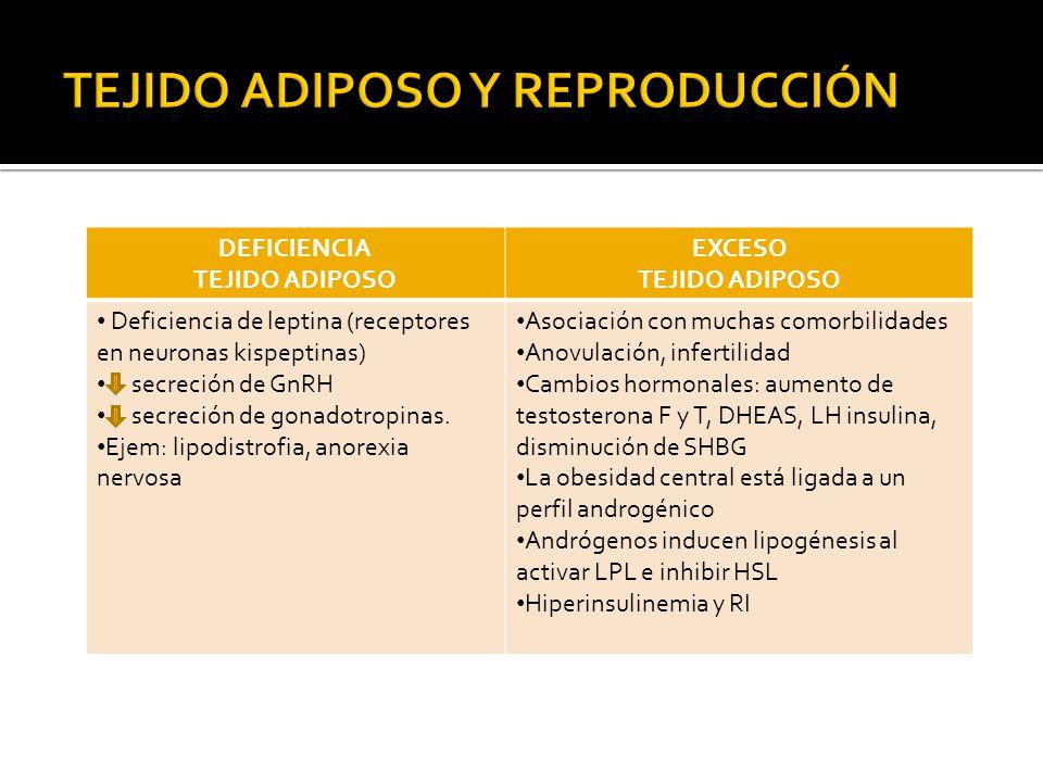 DEFICIENCIA TEJIDO ADIPOSO EXCESO TEJIDO ADIPOSO Deficiencia de leptina (receptores en neuronas kispeptinas) secreción de GnRH secreción de gonadotrop