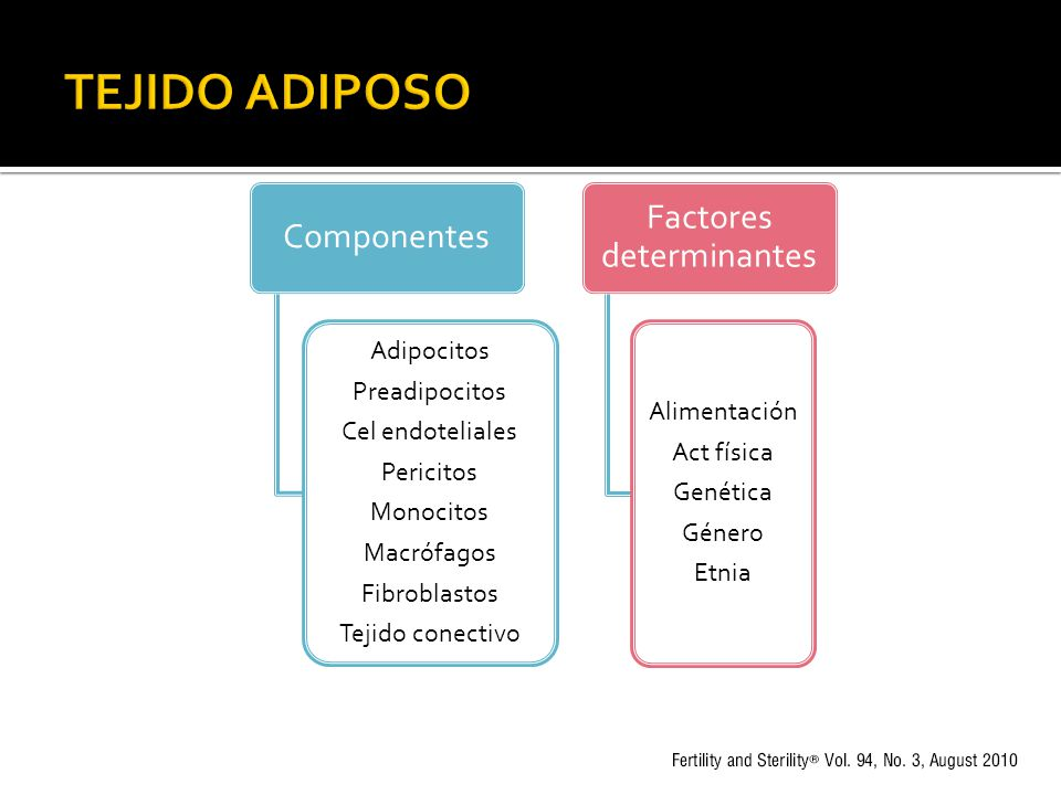 Componentes Adipocitos Preadipocitos Cel endoteliales Pericitos Monocitos Macrófagos Fibroblastos Tejido conectivo Factores determinantes Alimentación