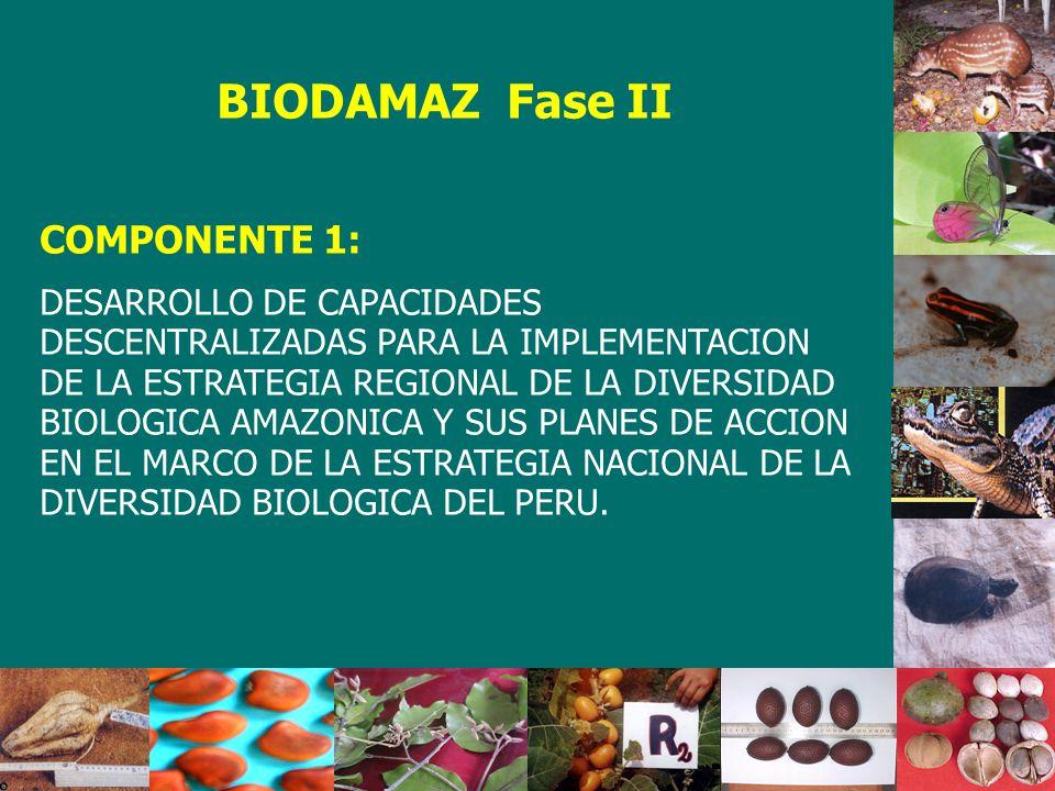 BIODAMAZ Fase II COMPONENTE 1: DESARROLLO DE CAPACIDADES DESCENTRALIZADAS PARA LA IMPLEMENTACION DE LA ESTRATEGIA REGIONAL DE LA DIVERSIDAD BIOLOGICA AMAZONICA Y SUS PLANES DE ACCION EN EL MARCO DE LA ESTRATEGIA NACIONAL DE LA DIVERSIDAD BIOLOGICA DEL PERU.