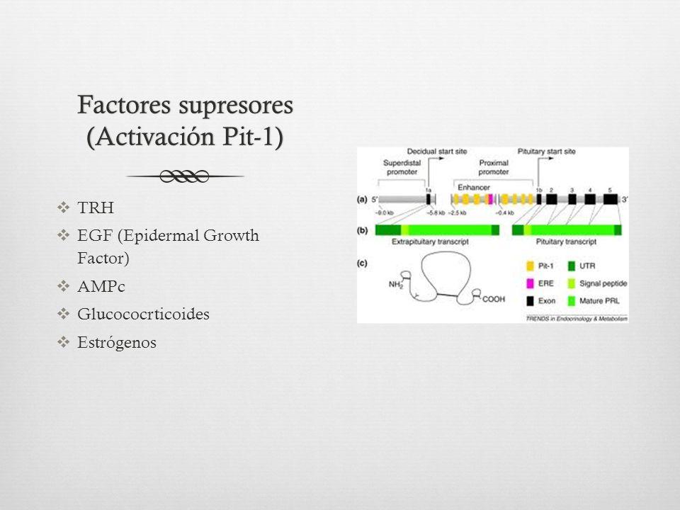 Factores supresores (Activación Pit-1) TRH EGF (Epidermal Growth Factor) AMPc Glucococrticoides Estrógenos