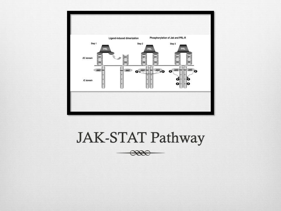 JAK-STAT PathwayJAK-STAT Pathway