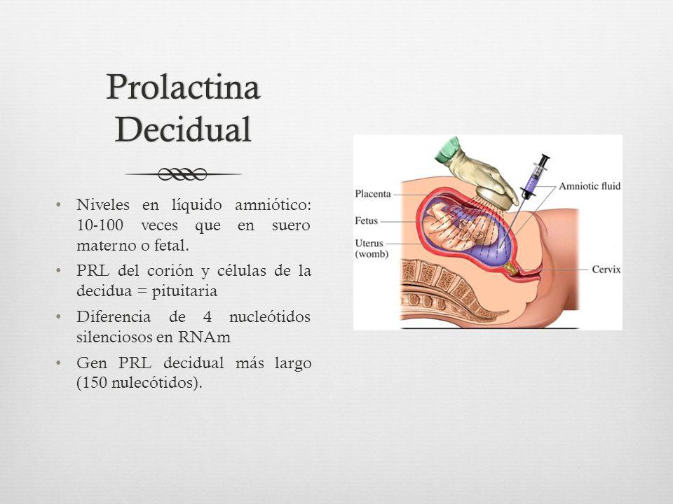 Prolactina Decidual Niveles en líquido amniótico: 10-100 veces que en suero materno o fetal.