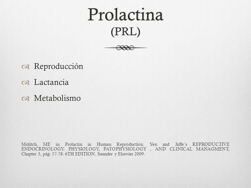 Prolactina Lactotrófos 15-25% de las células pituitarias Hombre = mujer Edad Gestación - hiperplasia Molitch, ME in Prolactin in Human Reproduction.