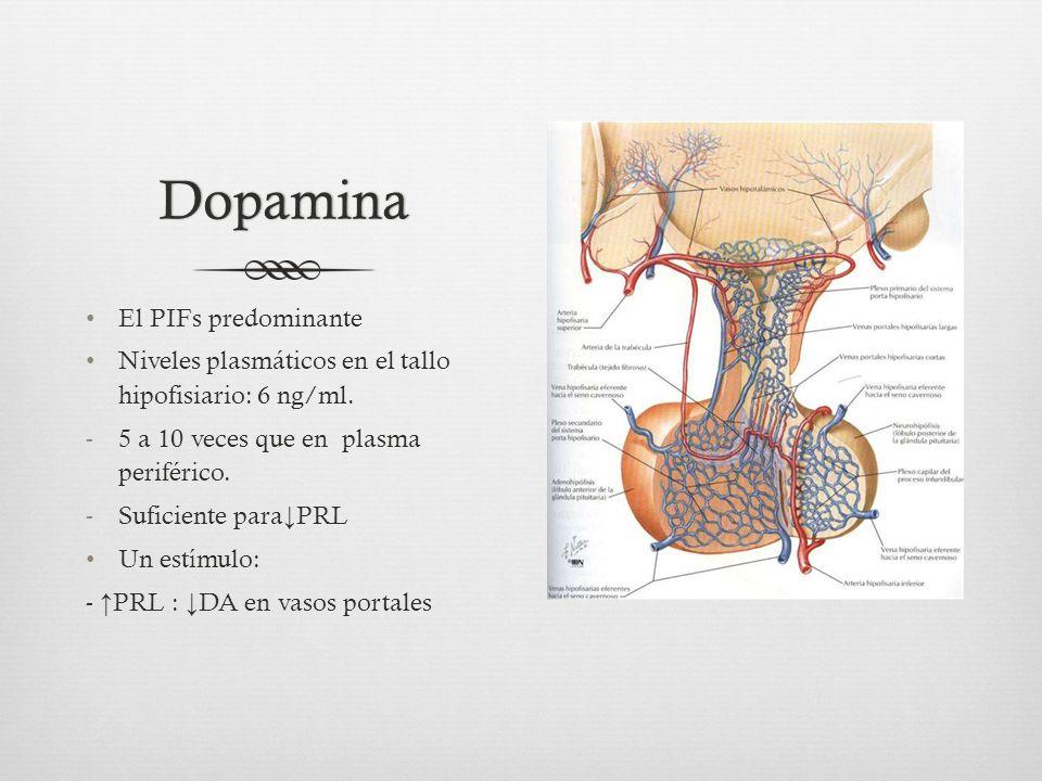 Dopamina El PIFs predominante Niveles plasmáticos en el tallo hipofisiario: 6 ng/ml.