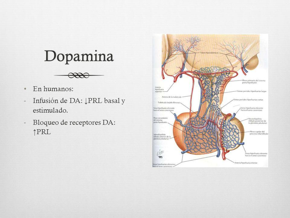 Dopamina En humanos: -Infusión de DA: PRL basal y estimulado. -Bloqueo de receptores DA: PRL