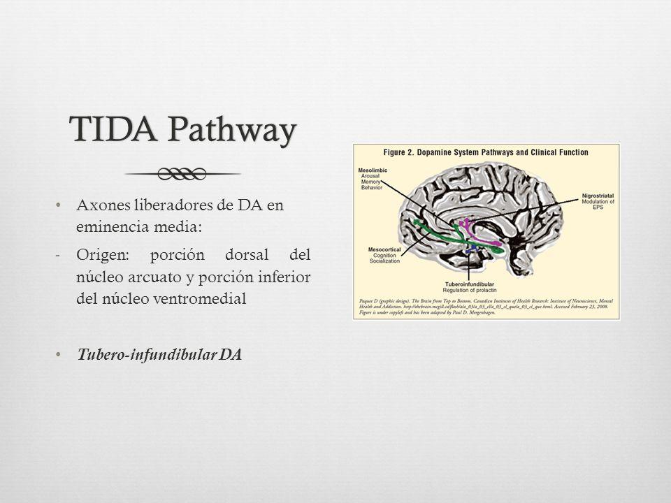 TIDA PathwayTIDA Pathway Axones liberadores de DA en eminencia media: -Origen: porción dorsal del núcleo arcuato y porción inferior del núcleo ventromedial Tubero-infundibular DA