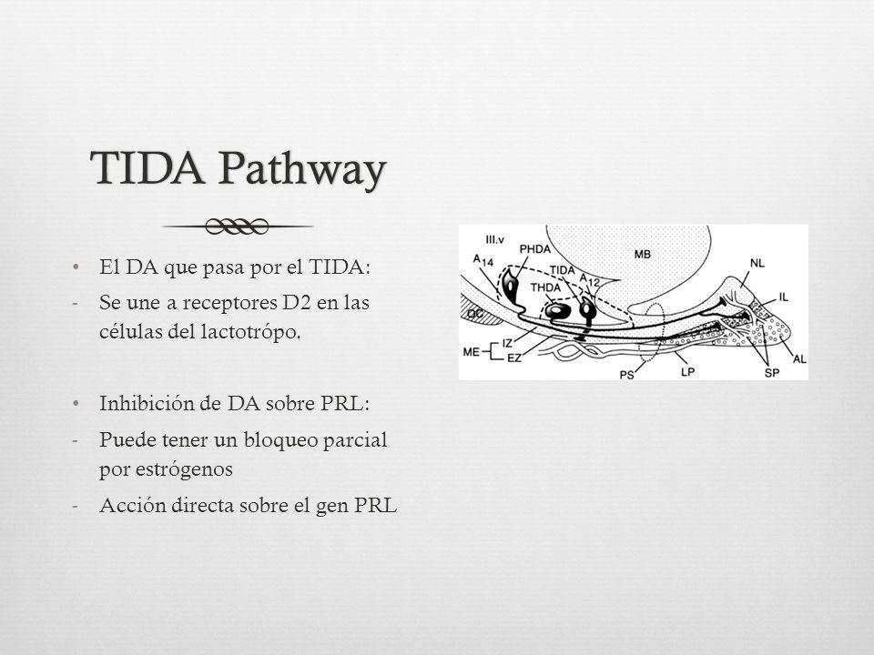 TIDA PathwayTIDA Pathway El DA que pasa por el TIDA: -Se une a receptores D2 en las células del lactotrópo.