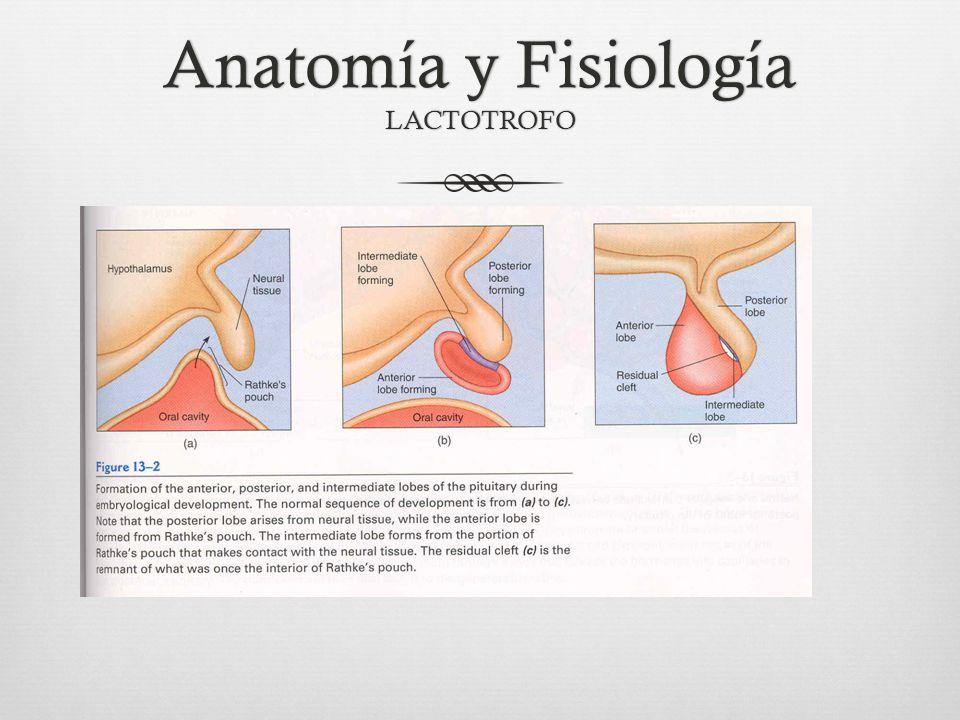 Lactancia Si continúa la lactancia: -PRL basal se mantiene -Amenorrea intensidad : falla ovulación y menstruación.