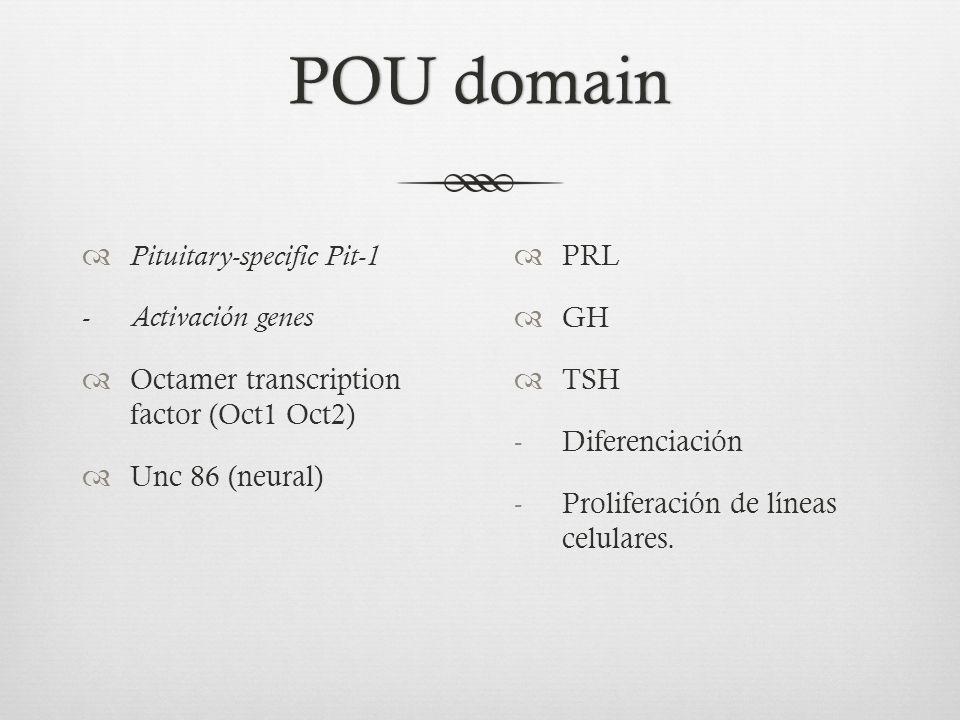 POU domainPOU domain Pituitary-specific Pit-1 - Activación genes Octamer transcription factor (Oct1 Oct2) Unc 86 (neural) PRL GH TSH -Diferenciación -Proliferación de líneas celulares.