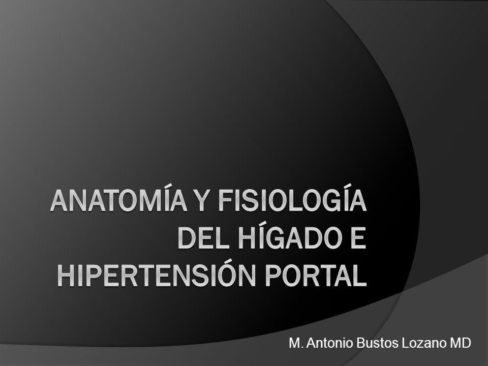 M. Antonio Bustos Lozano MD