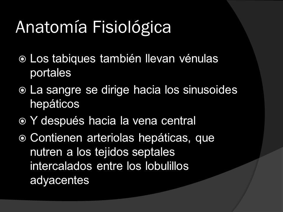 Anatomía Fisiológica Los tabiques también llevan vénulas portales La sangre se dirige hacia los sinusoides hepáticos Y después hacia la vena central C