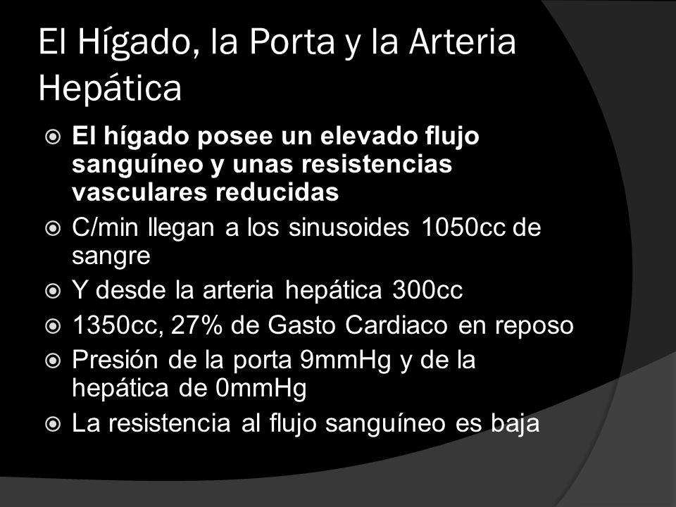 El Hígado, la Porta y la Arteria Hepática El hígado posee un elevado flujo sanguíneo y unas resistencias vasculares reducidas C/min llegan a los sinus