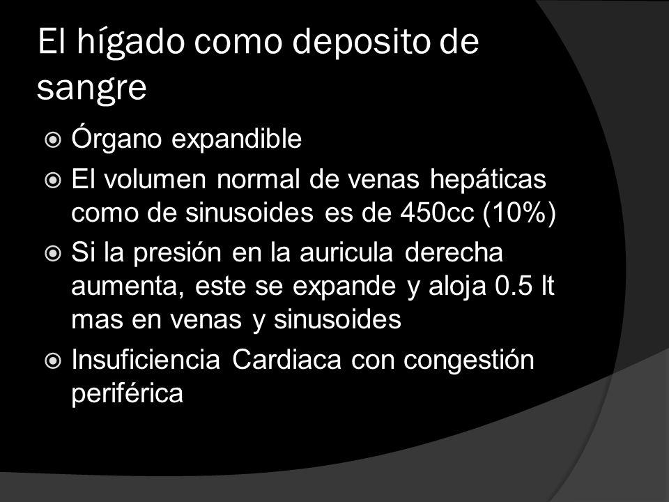 El hígado como deposito de sangre Órgano expandible El volumen normal de venas hepáticas como de sinusoides es de 450cc (10%) Si la presión en la auri