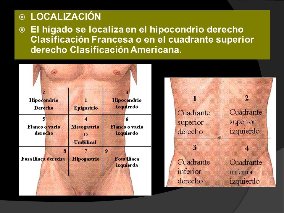 Estudios de Laboratorio Hiperesplenismo (Pancitopenia) Anemia ( Varices hemorragicas, hemolisis, mal nutrición o supresion de la medula osea x alcoholismo) Coagulopatia ( sintetizados en el Hígado) Hipokalemia, Hiponatremia, Alcalosis Metabolica Hiperbilirrubinemia ( Aguda o Crónica)
