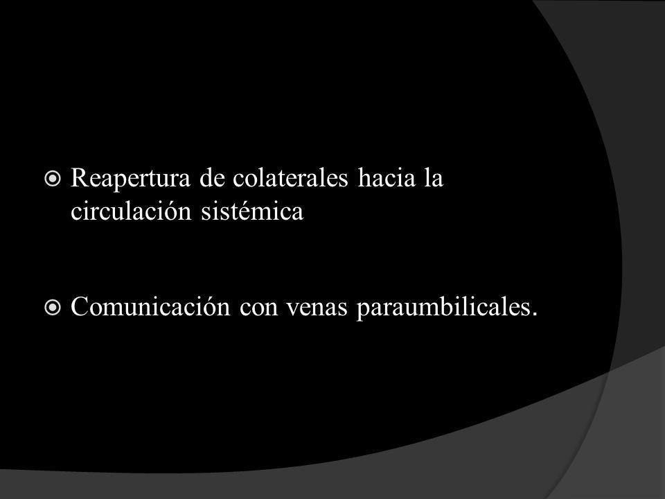 Reapertura de colaterales hacia la circulación sistémica Comunicación con venas paraumbilicales.