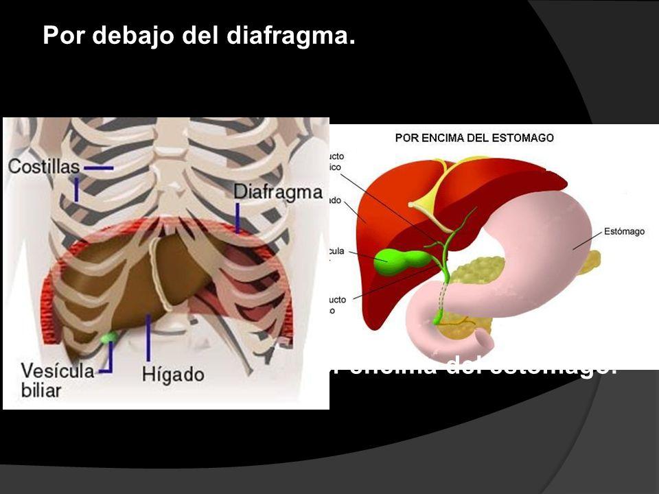 Por debajo del diafragma. Por encima del estómago.