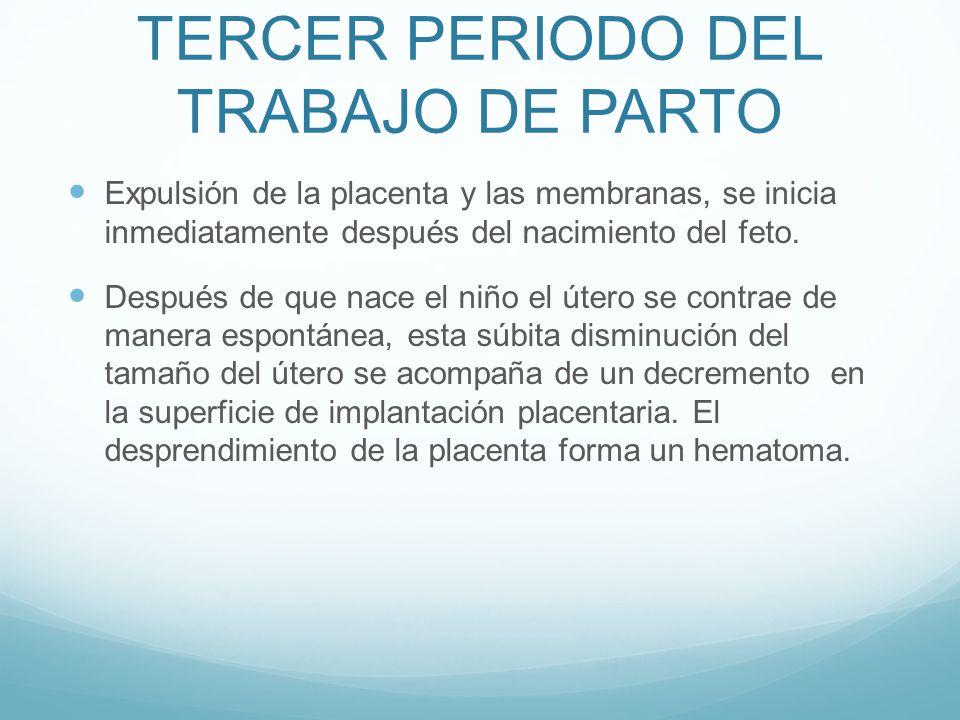 TERCER PERIODO DEL TRABAJO DE PARTO Expulsión de la placenta y las membranas, se inicia inmediatamente después del nacimiento del feto. Después de que