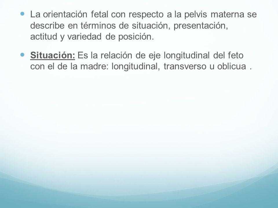 La orientación fetal con respecto a la pelvis materna se describe en términos de situación, presentación, actitud y variedad de posición. Situación: E