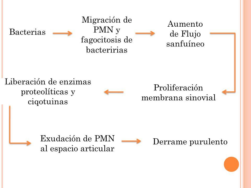 Bacterias Migración de PMN y fagocitosis de bacteririas Aumento de Flujo sanfuíneo Proliferación membrana sinovial Liberación de enzimas proteolíticas y ciqotuinas Exudación de PMN al espacio articular Derrame purulento