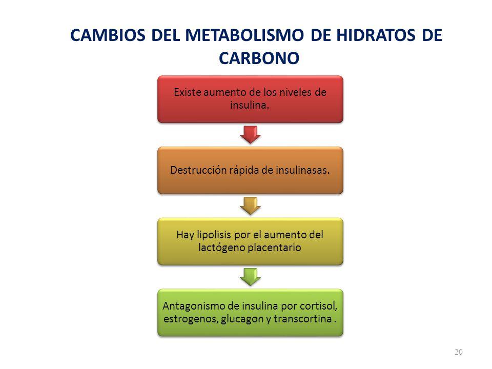 CAMBIOS DEL METABOLISMO DE HIDRATOS DE CARBONO 20 Existe aumento de los niveles de insulina.