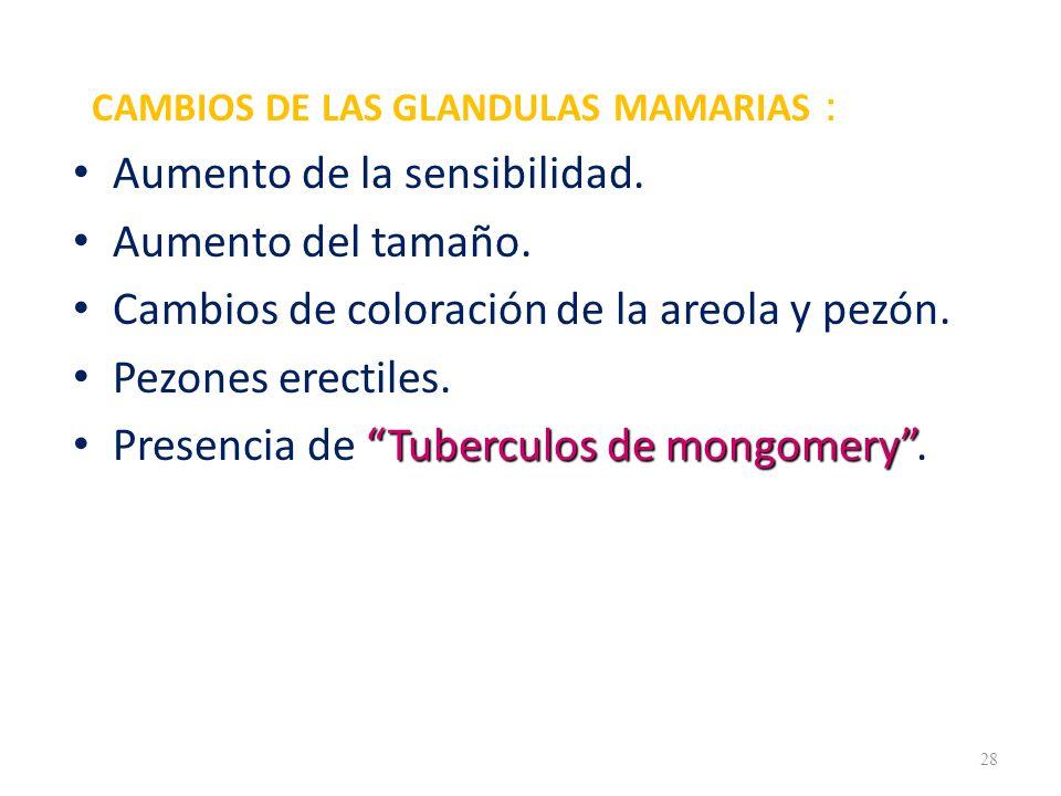 CAMBIOS DE LAS GLANDULAS MAMARIAS : Aumento de la sensibilidad.