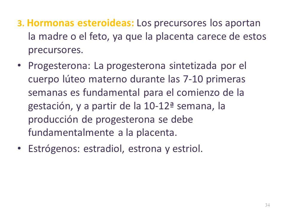 3. Hormonas esteroideas: Los precursores los aportan la madre o el feto, ya que la placenta carece de estos precursores. Progesterona: La progesterona