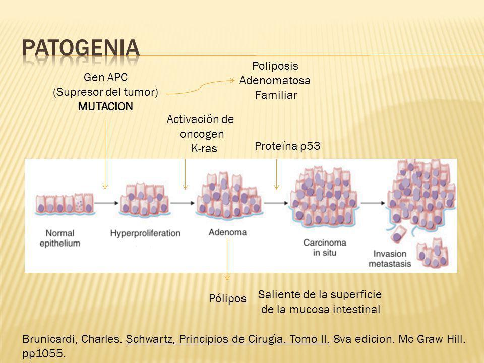 Gen APC (Supresor del tumor) MUTACION Poliposis Adenomatosa Familiar Pólipos Saliente de la superficie de la mucosa intestinal Activación de oncogen K