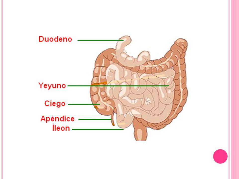 Debido a defectos estructurales Síndrome del asa ciega Enfermedades inflamatorias especialmente la enfermedad de Crohn Fístulas, diverticulitis y estenosis Condiciones infiltrativas como la amiloidosis, linfoma, Gastroenteropatía eosinofílica Enteritis por radiación Esclerodermia y enfermedades del colágeno