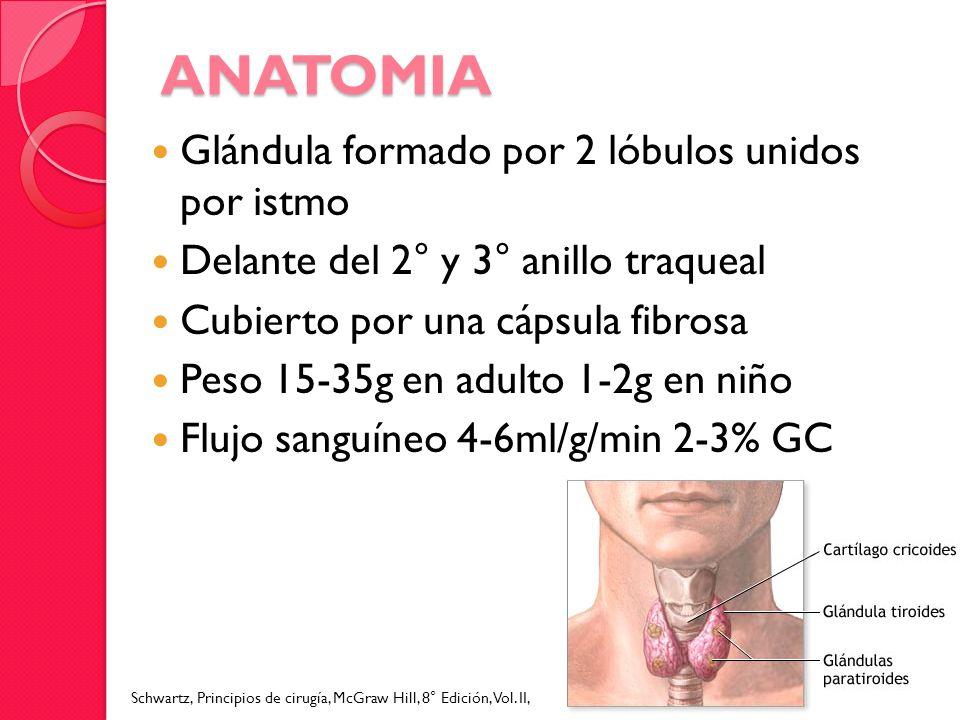ANATOMIA Glándula formado por 2 lóbulos unidos por istmo Delante del 2° y 3° anillo traqueal Cubierto por una cápsula fibrosa Peso 15-35g en adulto 1-